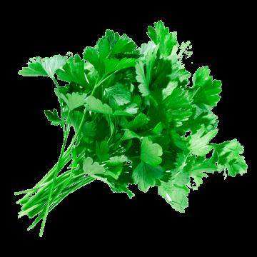 Зелень петрушки (5г)